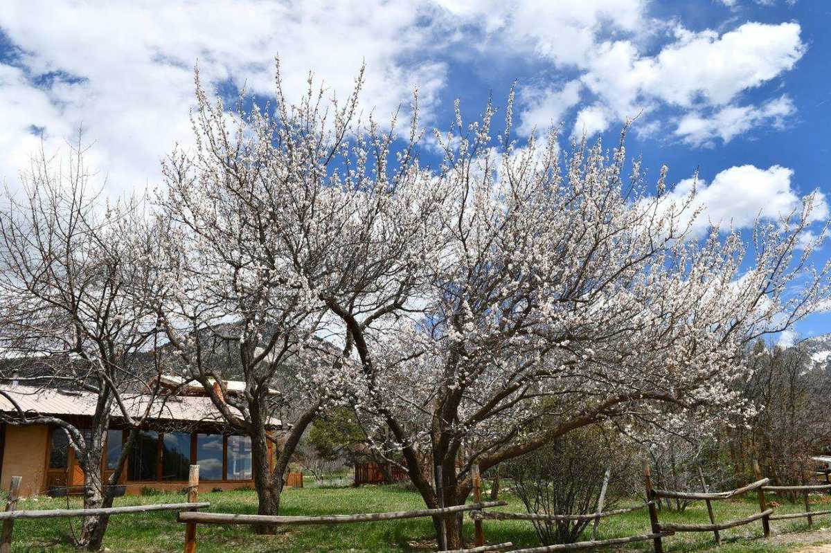 $1,200,000 - 4Br/3Ba -  for Sale in Taos