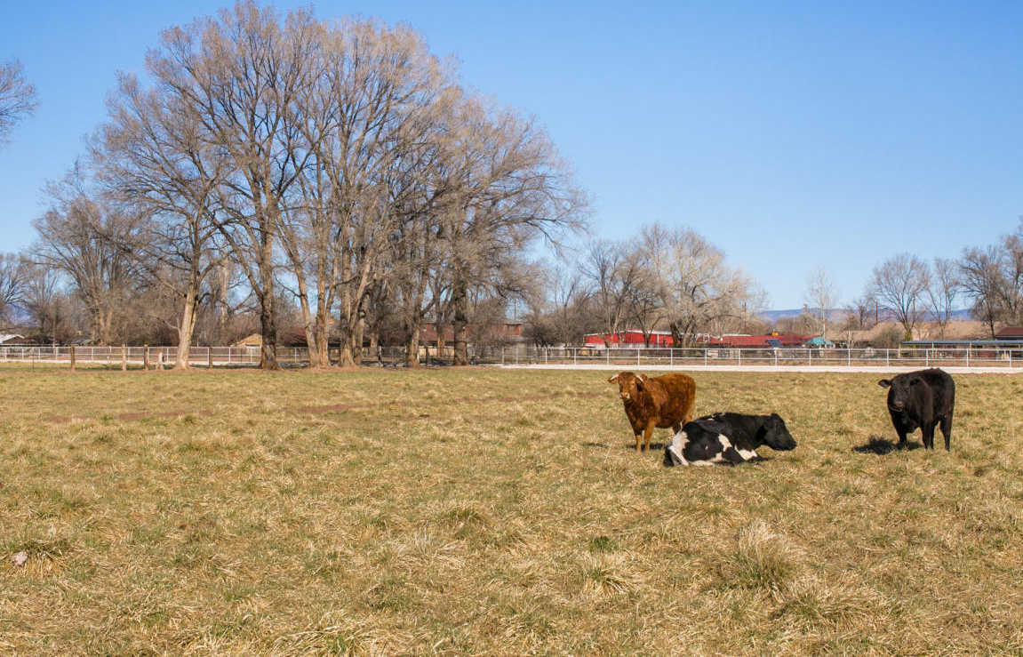 $355,000 - 3Br/1Ba -  for Sale in Bosque Farms 24, Bosque Farms